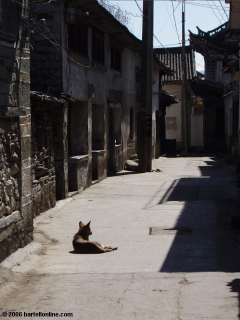 A dog relaxes in a quiet alley near the Three Pagodas outside Dali, Yunnan, China